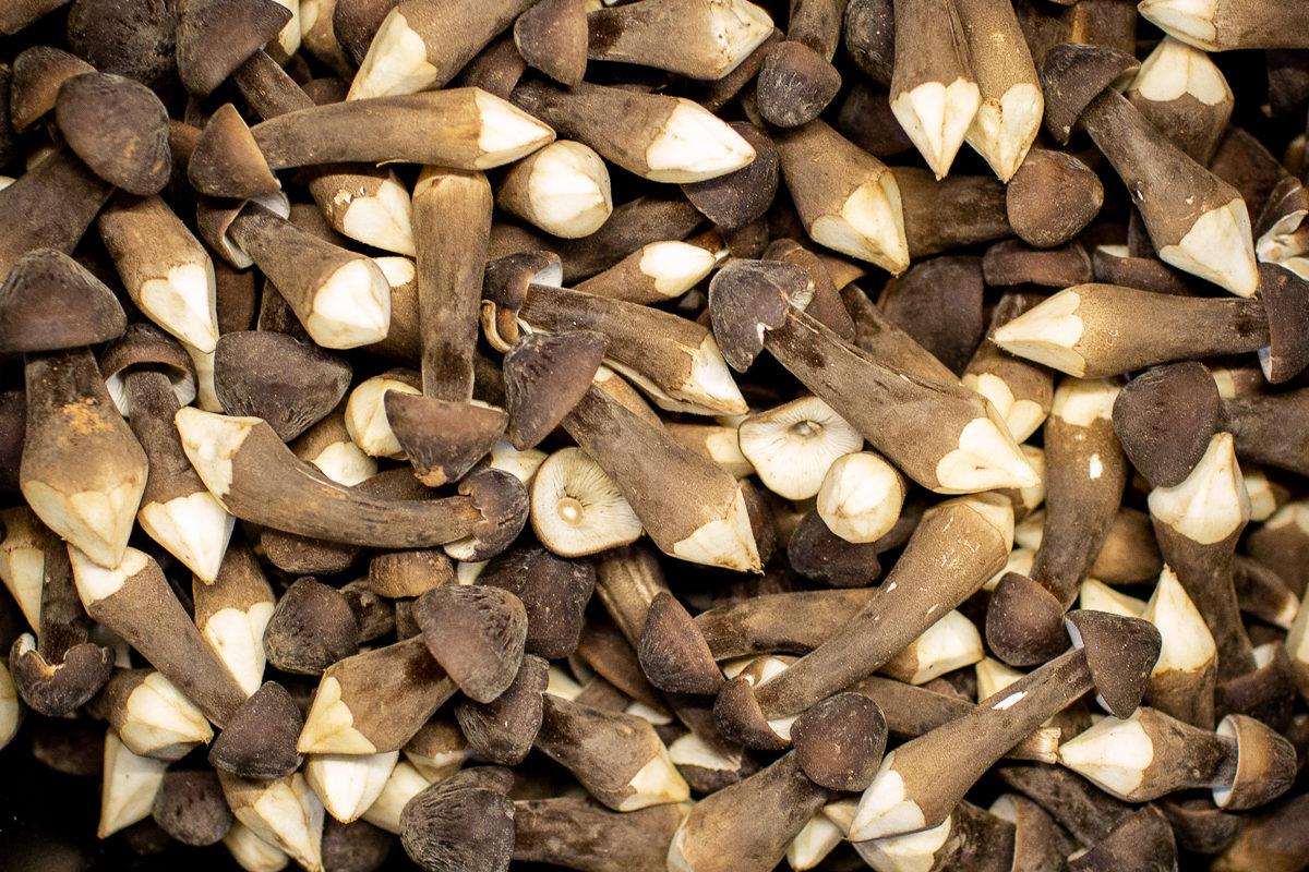 Fruit And Veg Market Report February 2019 Chestnut Royal Mushrooms