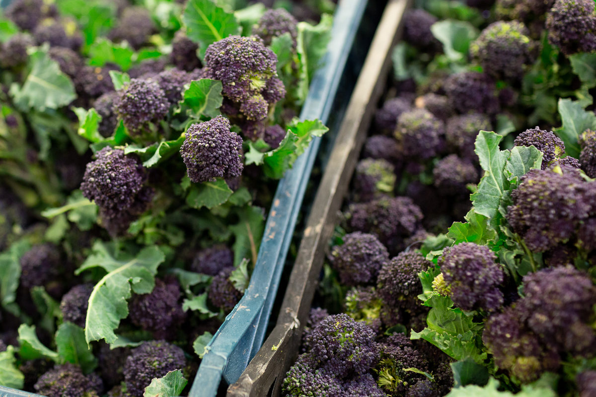 Fruit And Veg Market Report January 2019 Purple Sprouting
