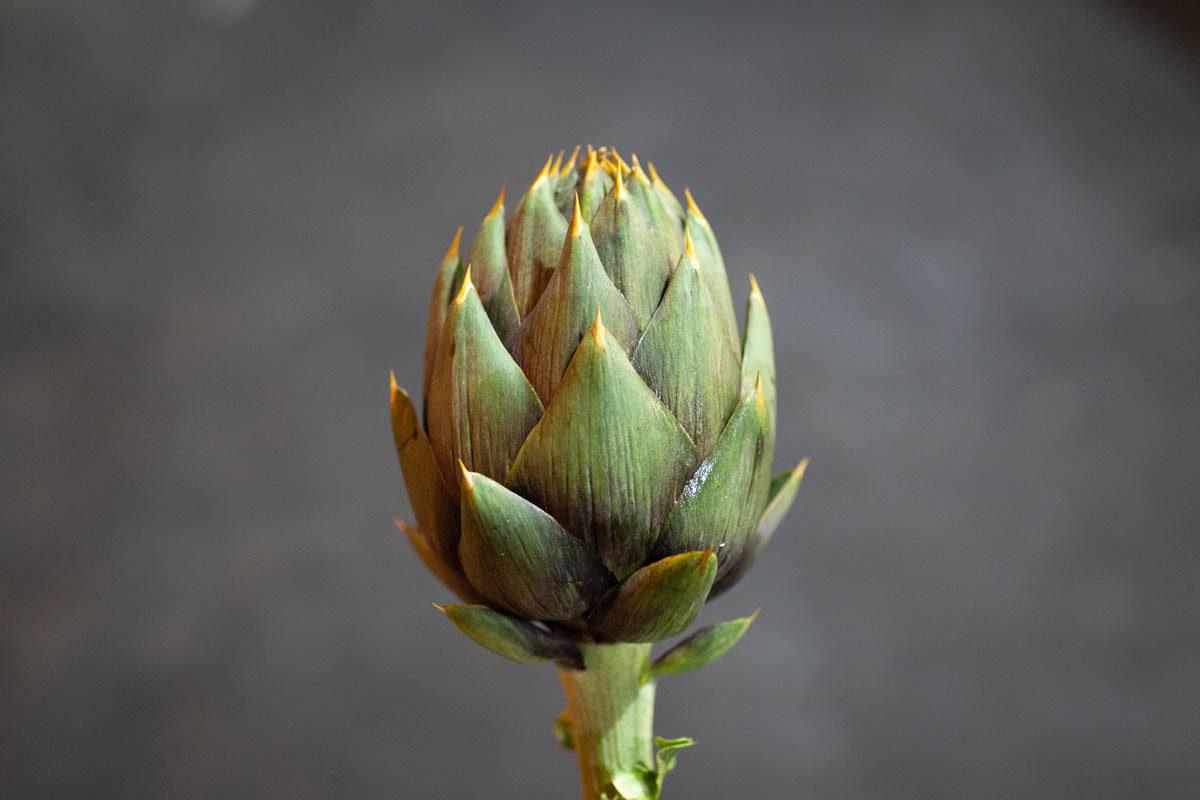Fruit And Veg Market Report June 2019 Spiny Artichoke