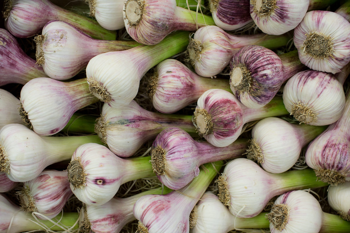 Fruit And Veg Market Report May 2018 Violet Garlic