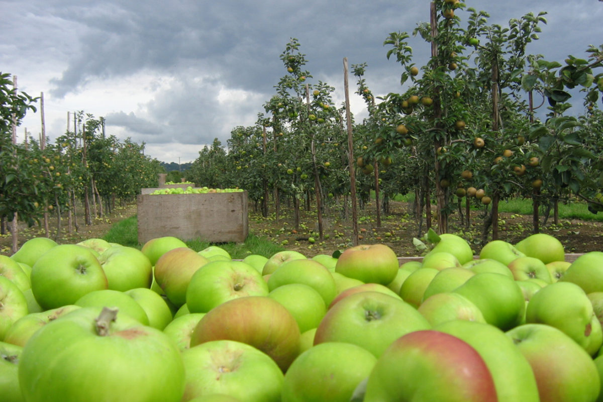 Fruit And Vegetable Market Chefs Guide To Apples And Pears Farm