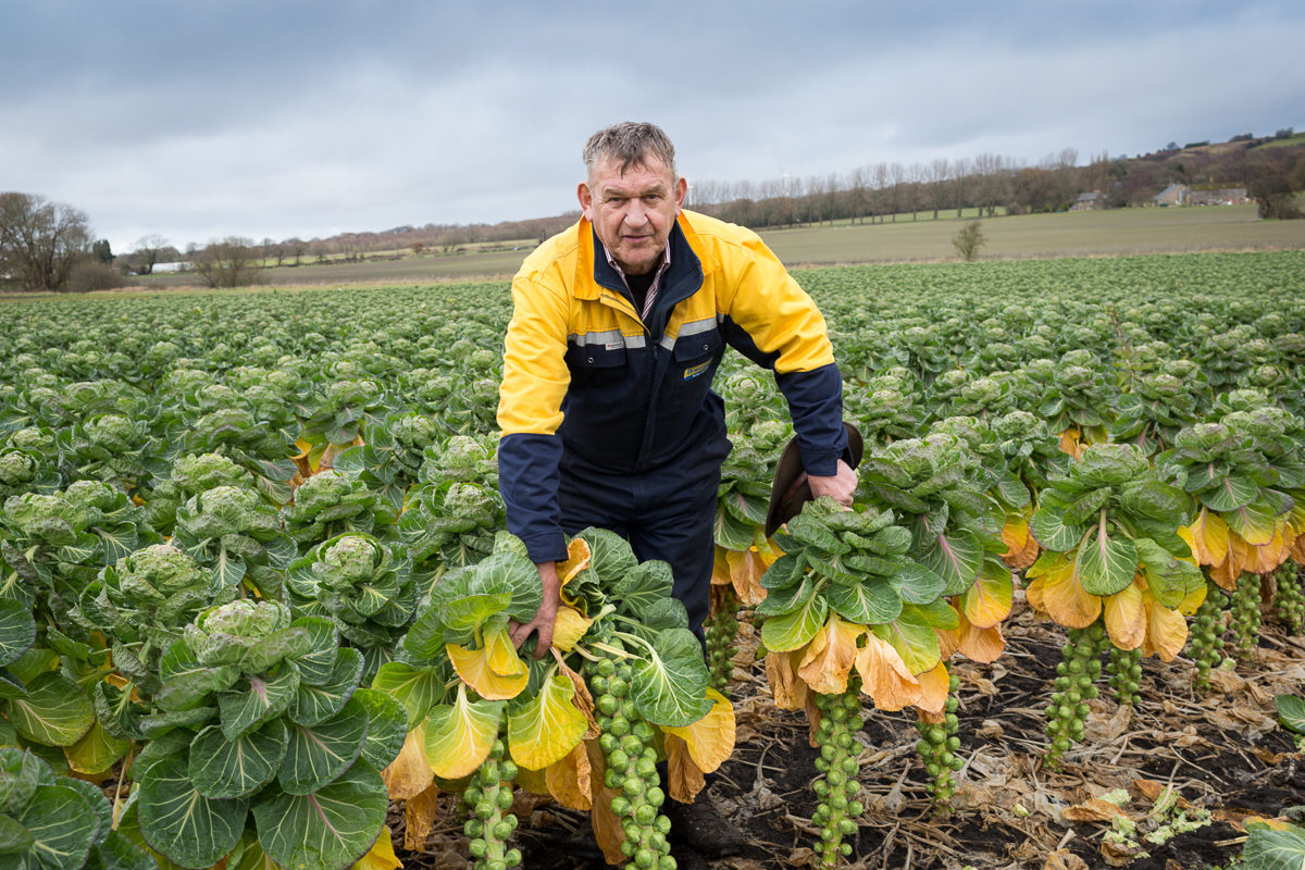 Fruit And Vegetable Market Chefs Guide To Brussel Sprouts December 2017 David Cook In Field