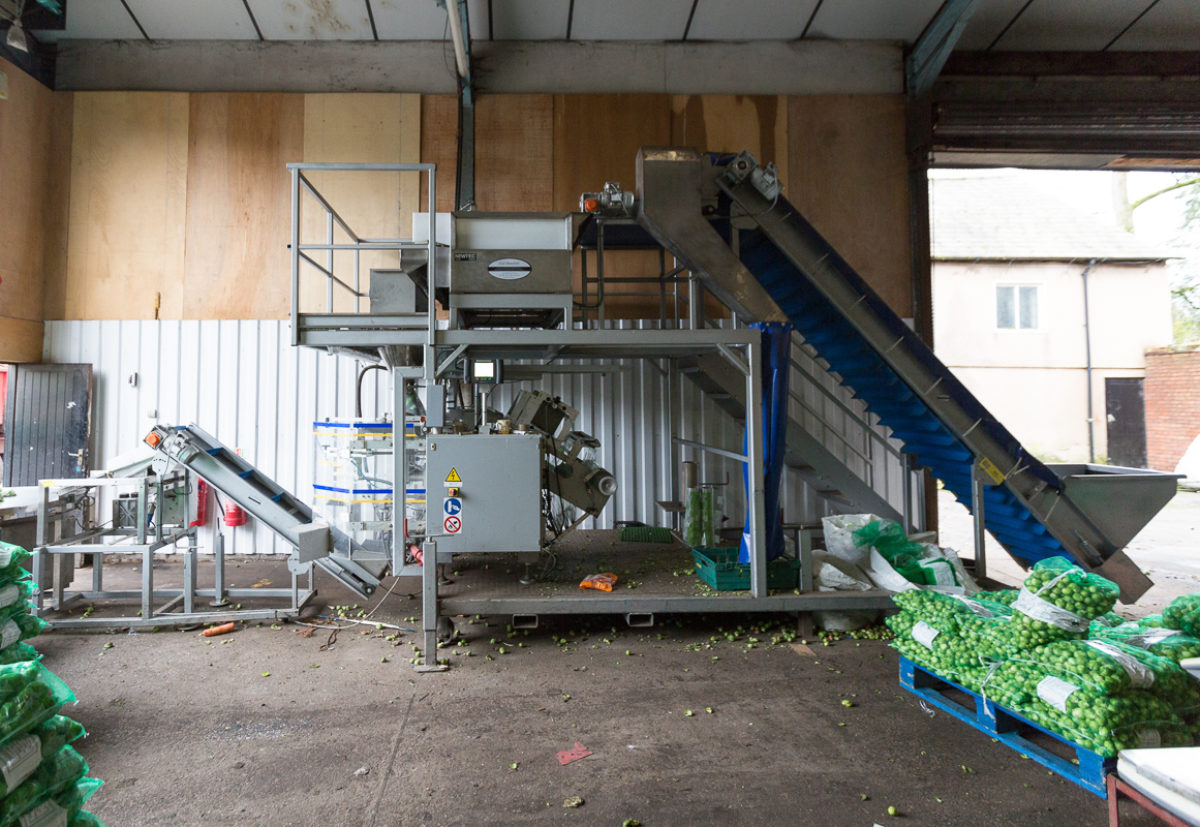 Fruit And Vegetable Market Chefs Guide To Brussel Sprouts December 2017 Grading Machine