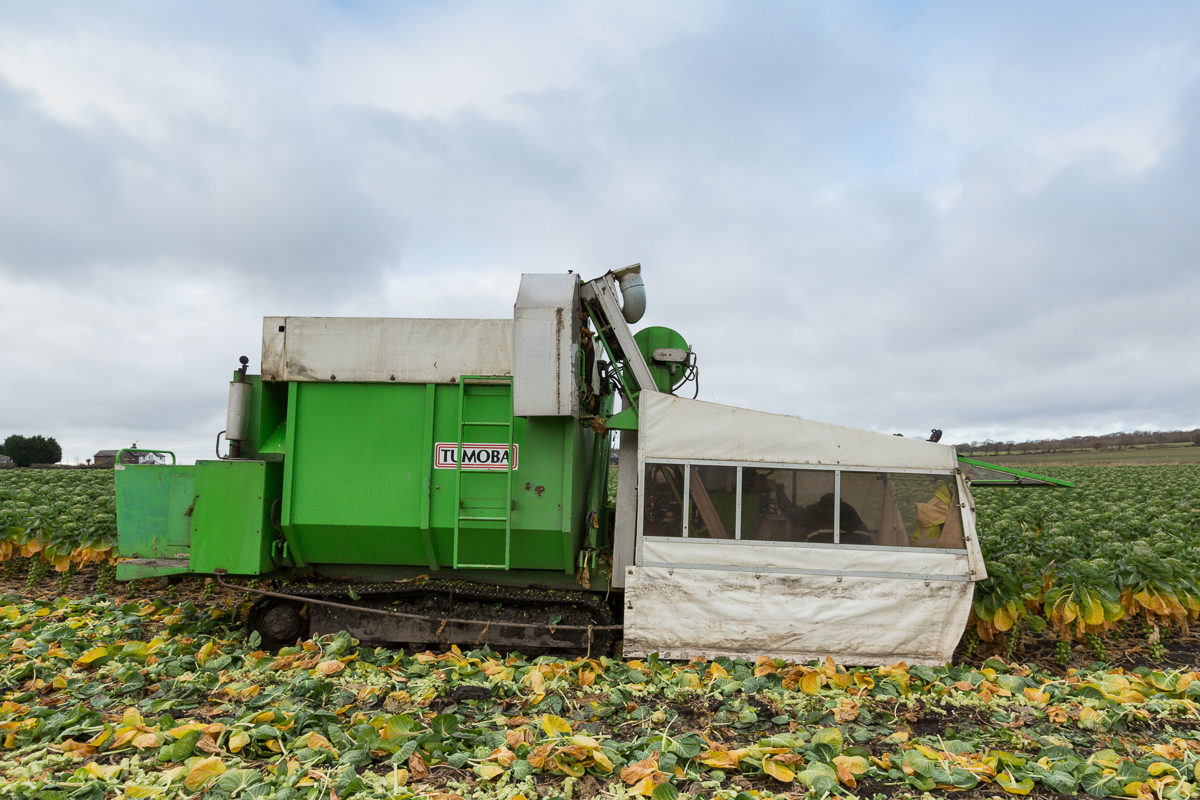 Fruit And Vegetable Market Chefs Guide To Brussel Sprouts December 2017 Harvester In Field