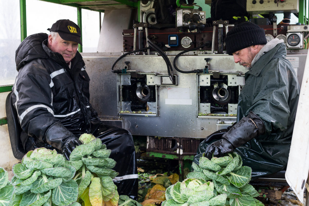 Fruit And Vegetable Market Chefs Guide To Brussel Sprouts December 2017 In The Field