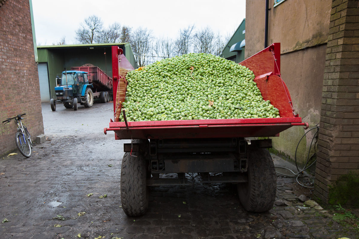 Fruit And Vegetable Market Chefs Guide To Brussel Sprouts December 2017 Lorry Of Sprouts