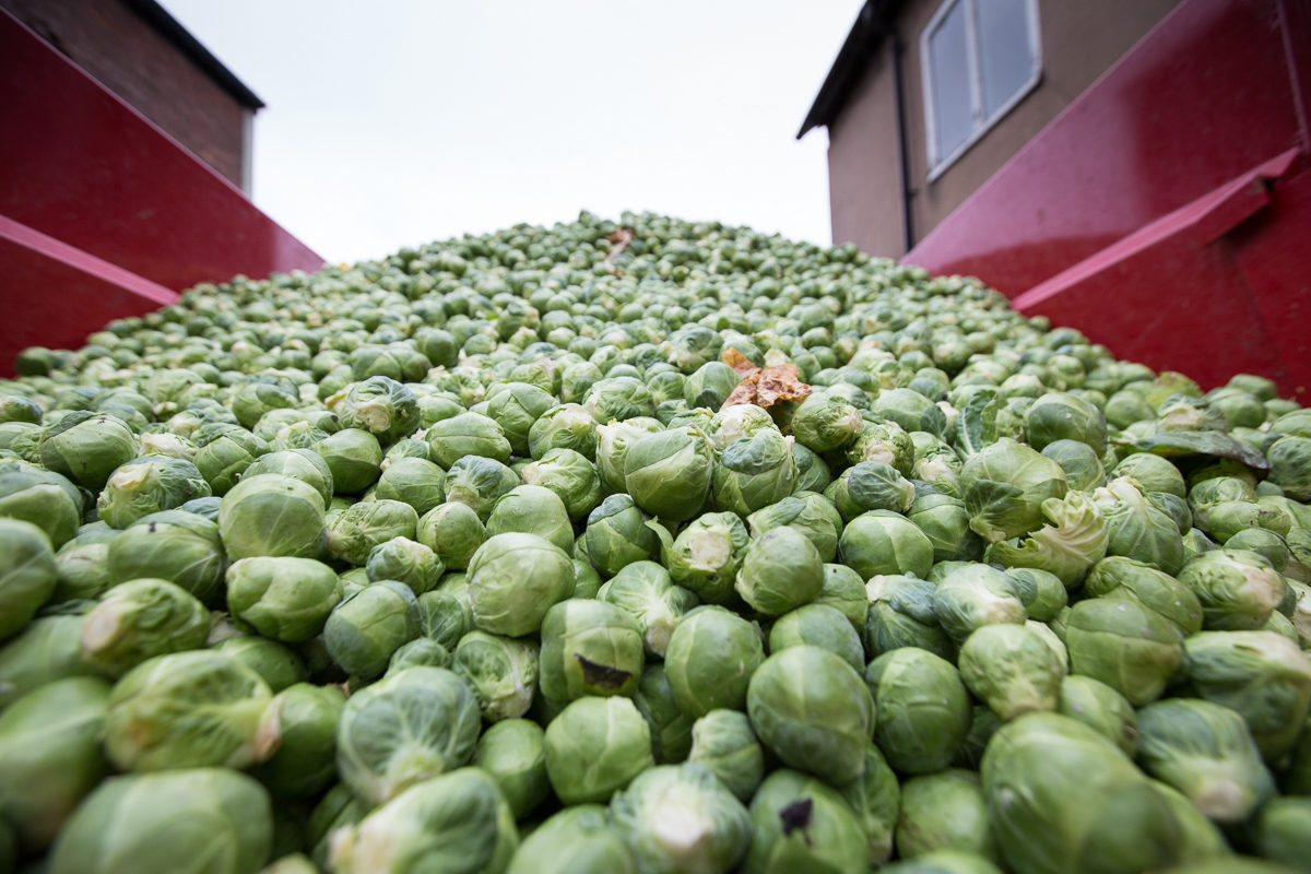 Fruit And Vegetable Market Chefs Guide To Brussel Sprouts December 2017 Mountain Of Sprouts