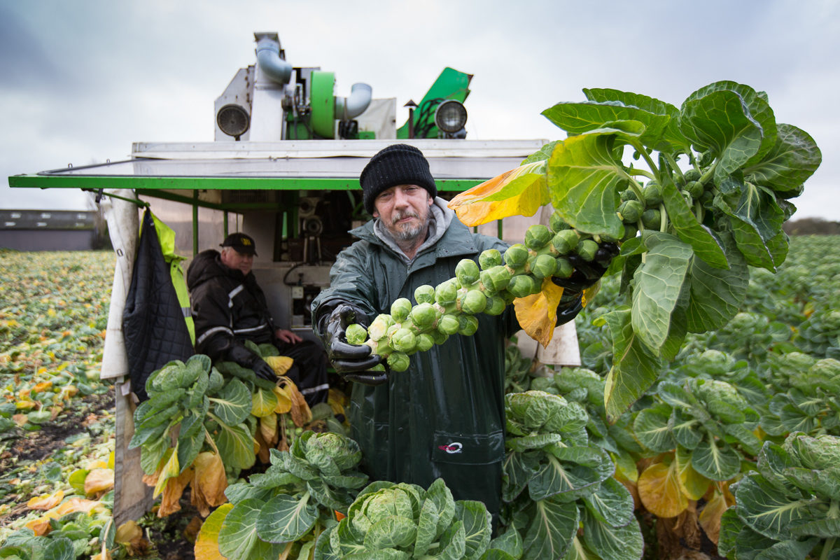 Fruit And Vegetable Market Chefs Guide To Brussel Sprouts December 2017 Portrait