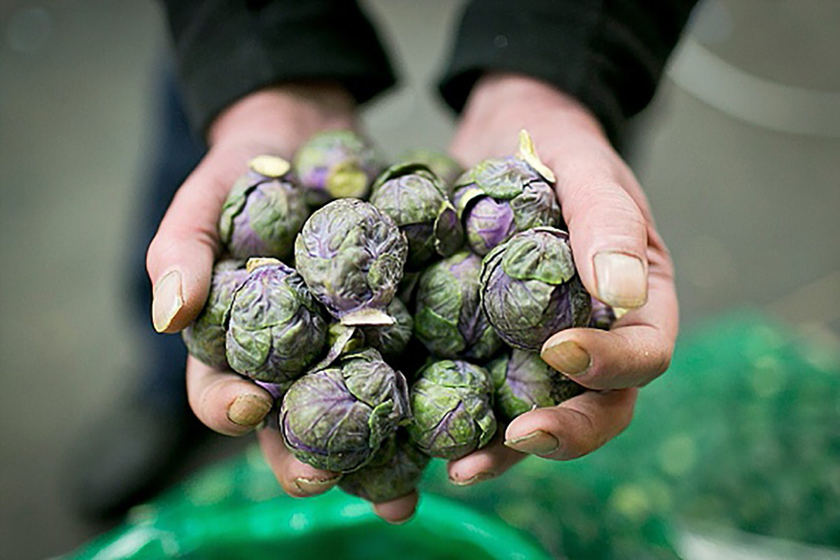 Fruit And Vegetable Market Chefs Guide To Brussel Sprouts December 2017 Purple Sprouts