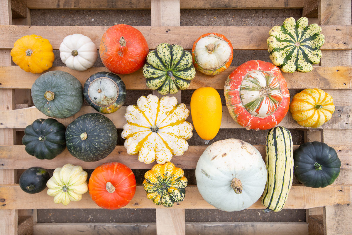 Fruit And Vegetable Market Chefs Guide To Squashes Varieties