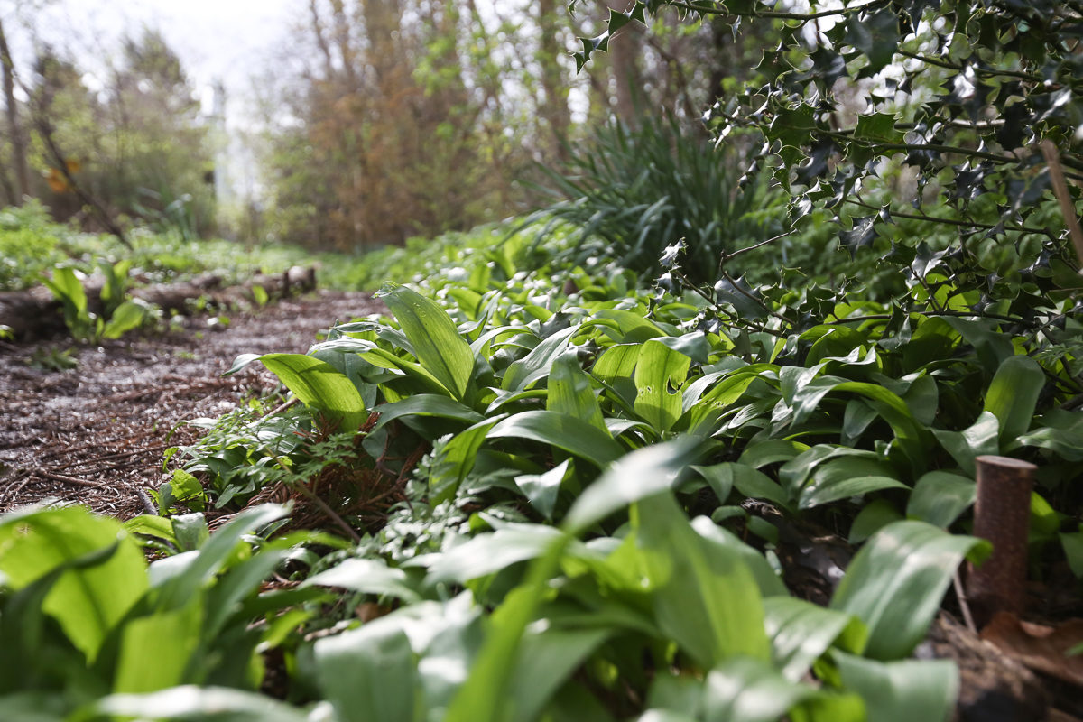 Fruit And Vegetable Market Chefs Guide To Wild Garlic Woodland