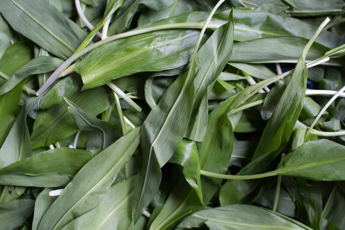 Fruit And Vegetable Market Report April 2018 Wild Garlic