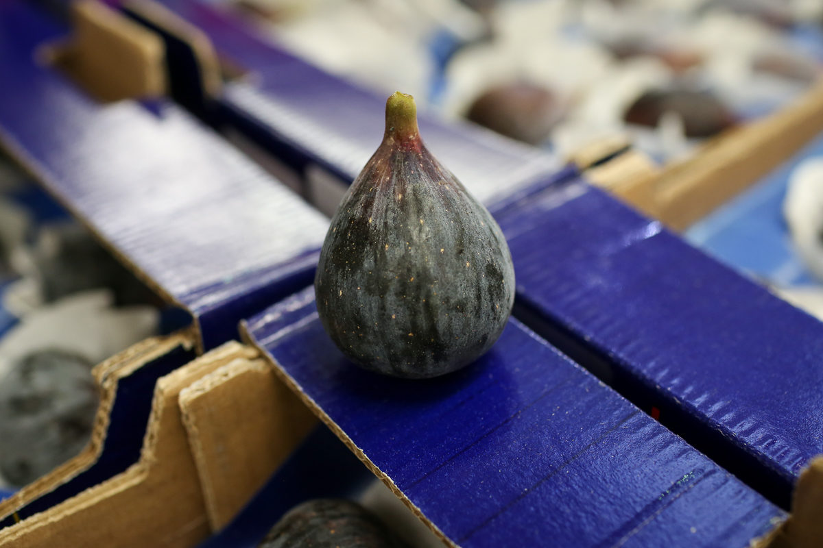 Fruit And Vegetable Market Report August 2018 Bura Black Figs