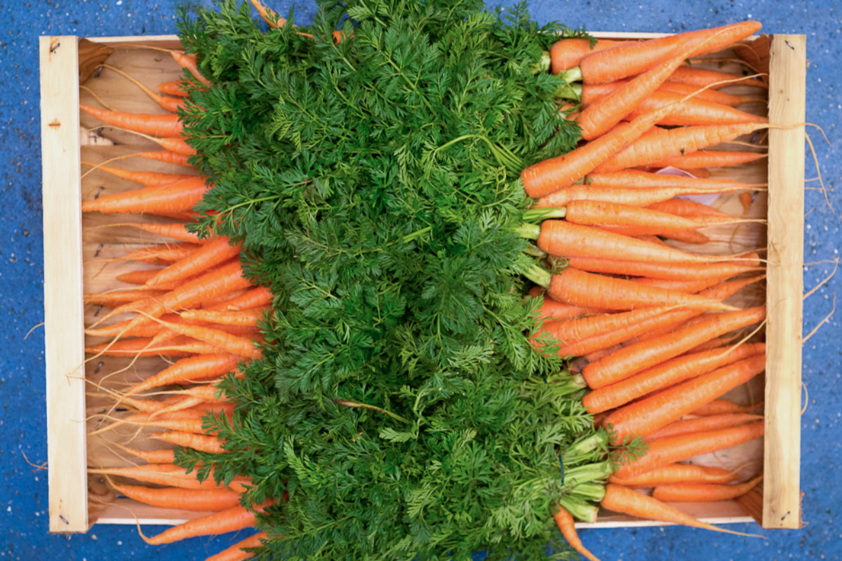 Fruit And Vegetable Market Report March 2018 Carrots