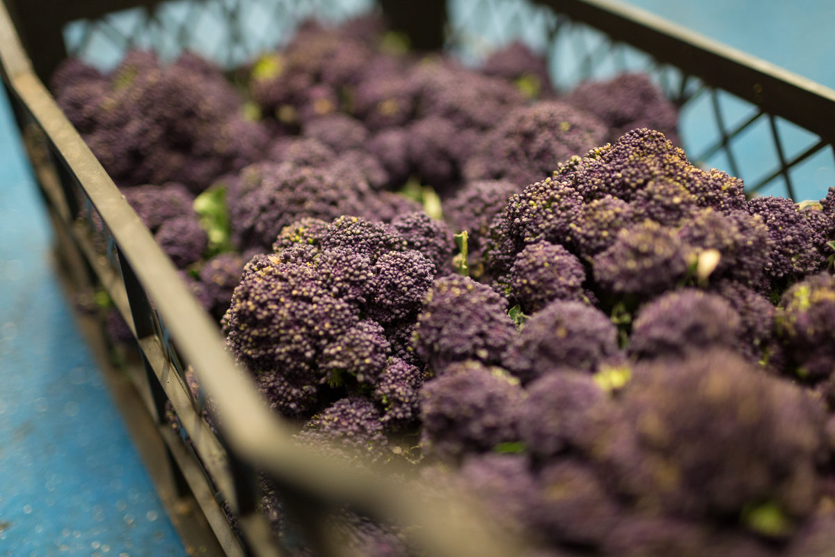 Fruit And Vegetable Market Report March 2018 Purple Sprouting