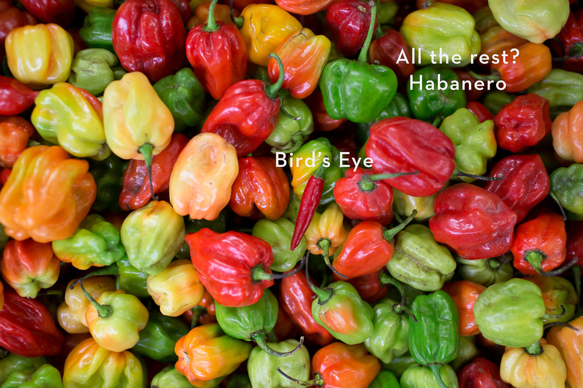 Fruit And Vegetable Market Report November 2017 Habanero Chillies