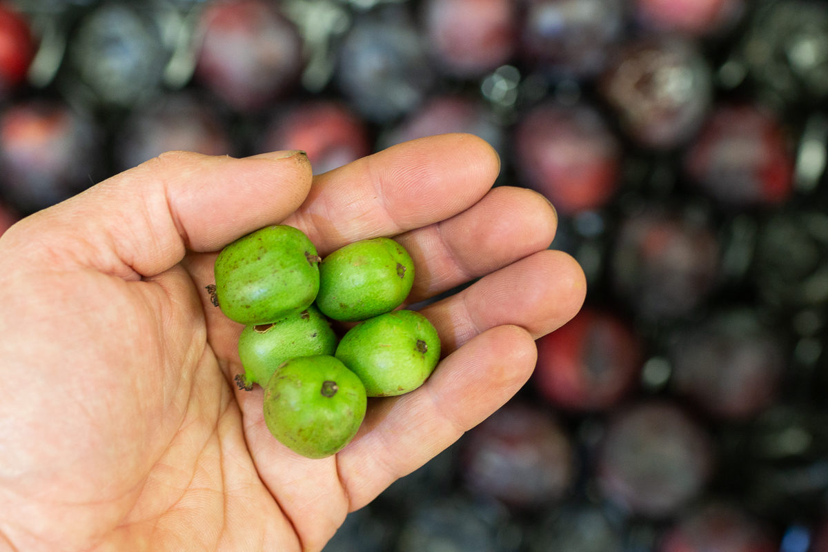 Fruit And Vegetable Market Report October 2018 Kiwi Berries