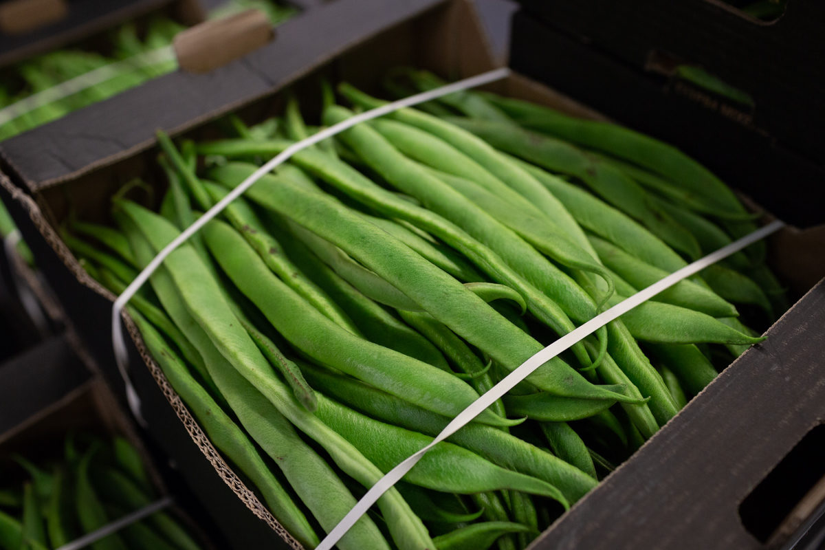 Fruit And Vegetable Market Report October 2018 Runner Beans