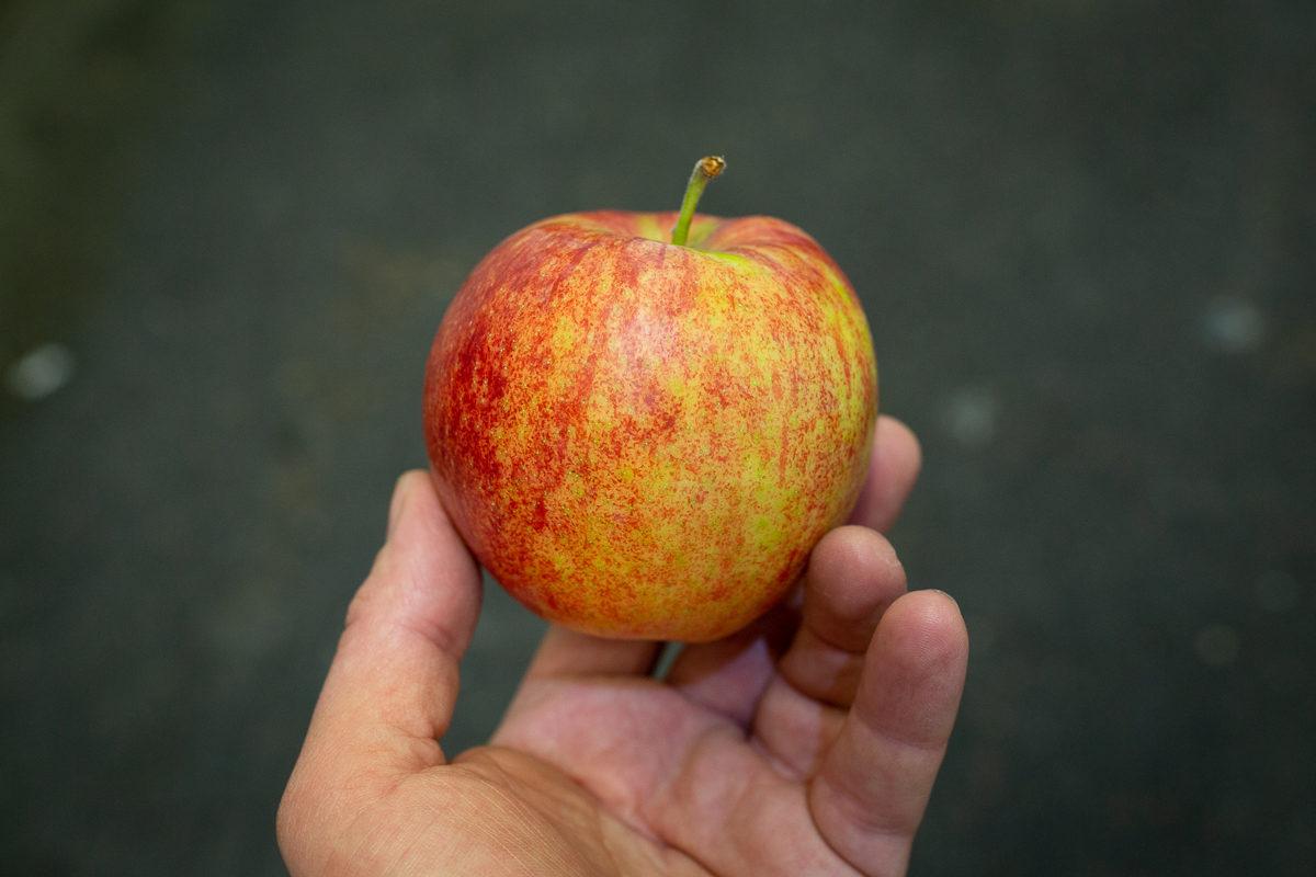 Fruit And Vegetable Market Report September 2018 Robin Apple