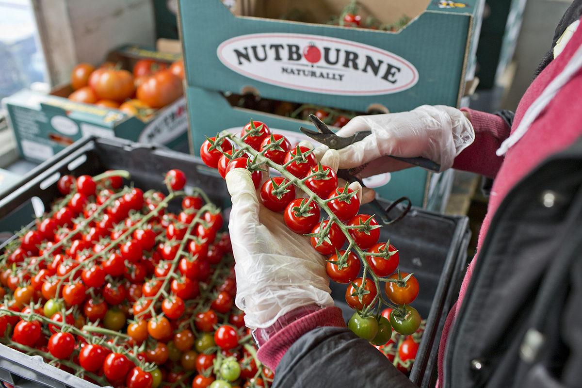 New Covent Garden Market Customer Profile 2014 Nutbourne Preparing Orders