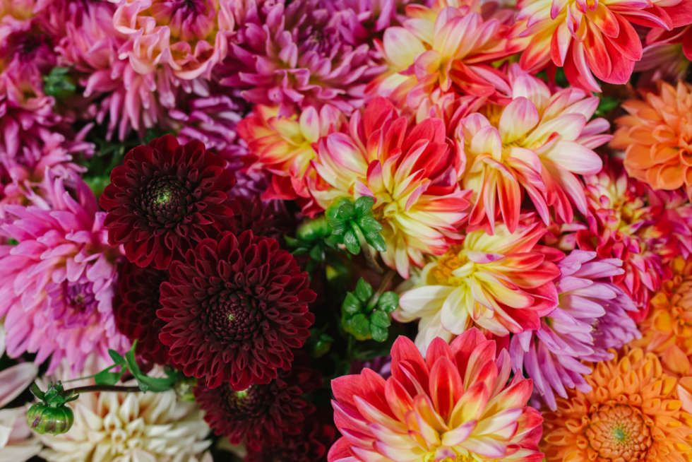 15 Flower Market traders to follow on Instagram