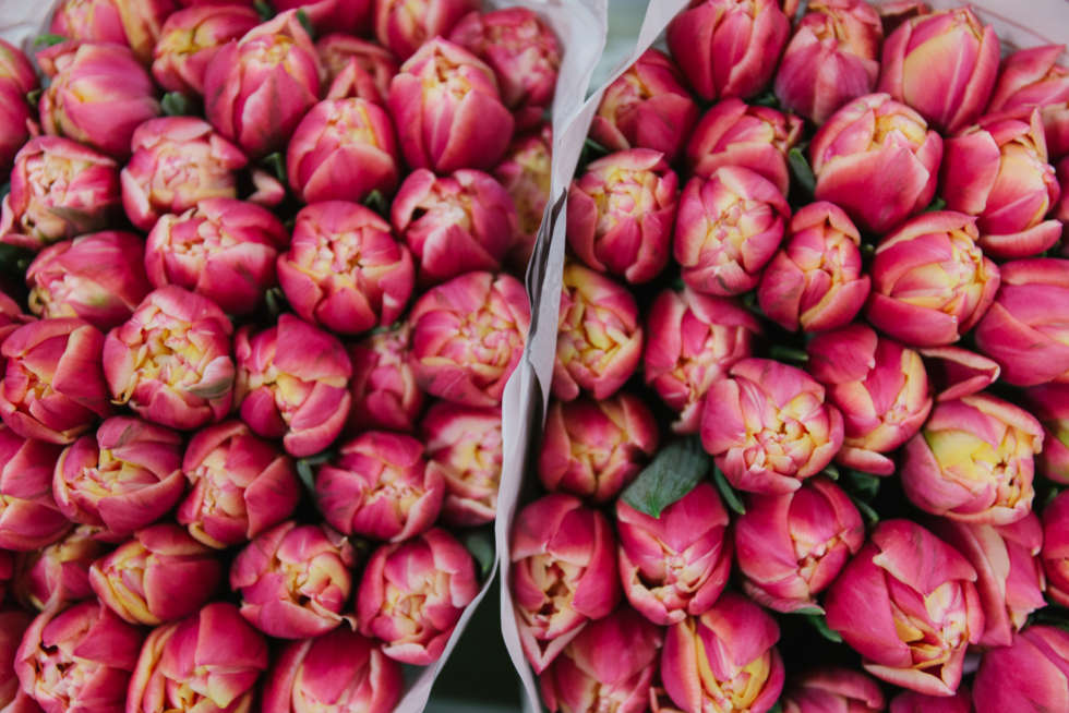 A florist's guide to tulips