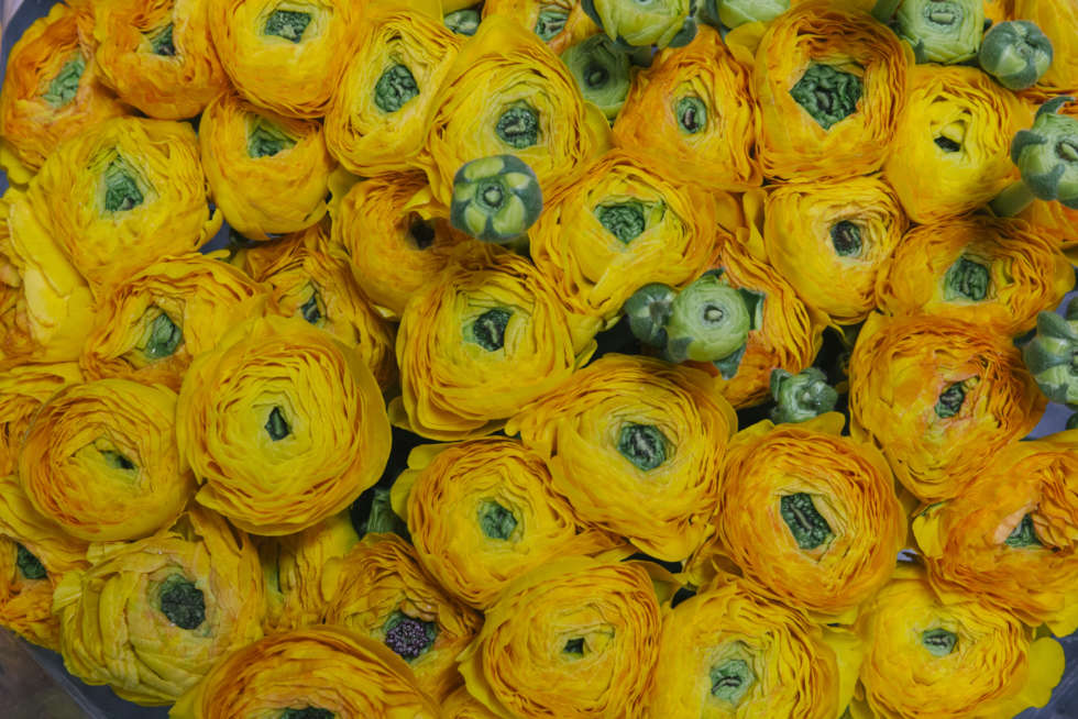 A florist's guide to ranunculus