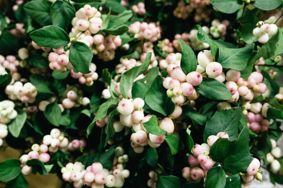 A florist's guide to snowberry