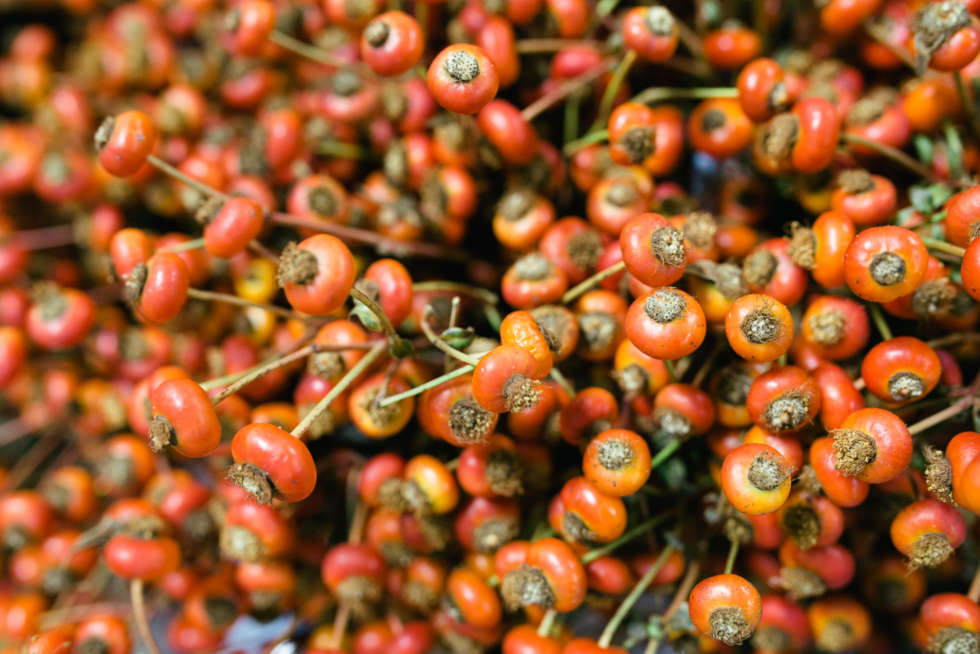 A florist's guide to rose hips, berries and seed heads