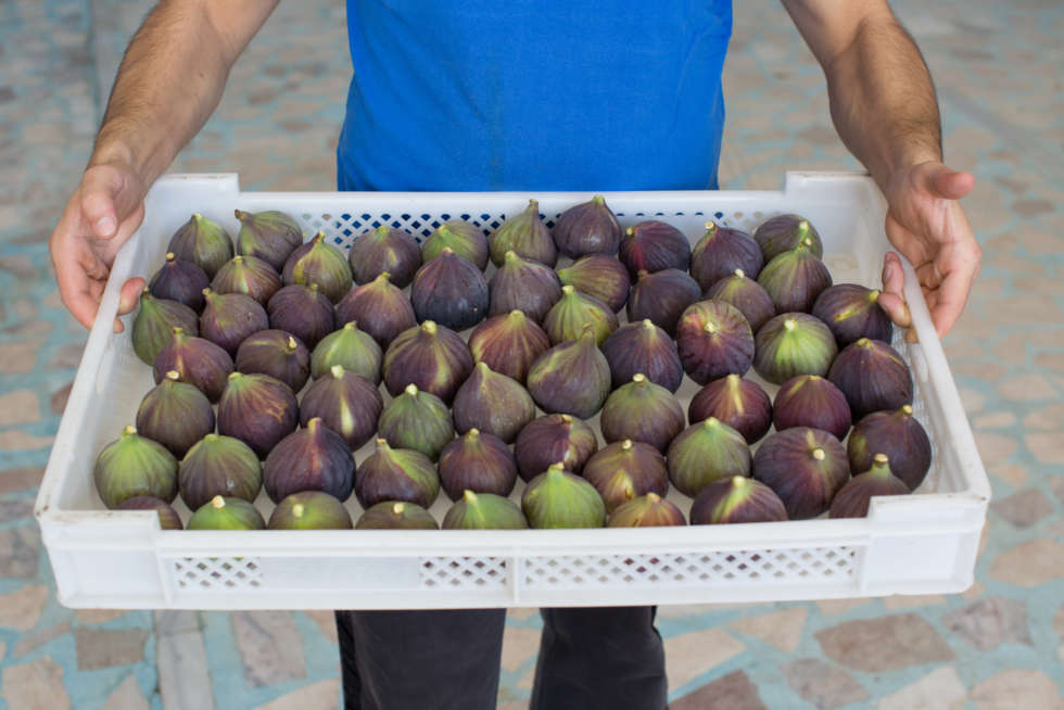 A guide to Bursa Black Figs