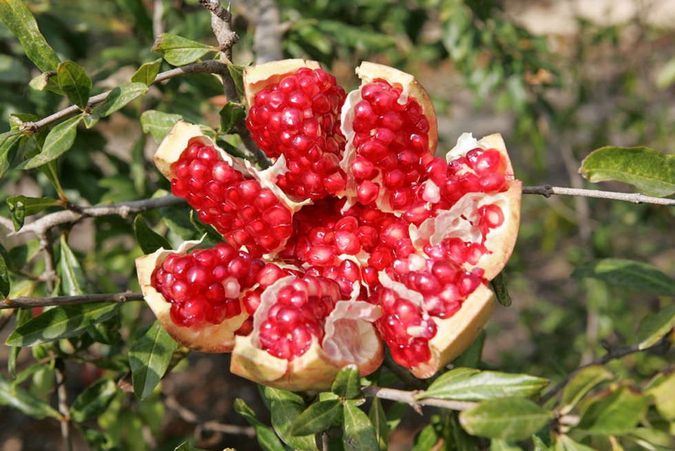 A chef's guide to pomegranates