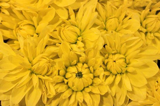 Dahlias at New Covent Garden Flower Market