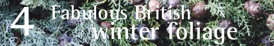 Fabulous British Winter foliage