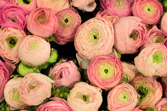 Ranunculus at New Covent Garden Flower Market