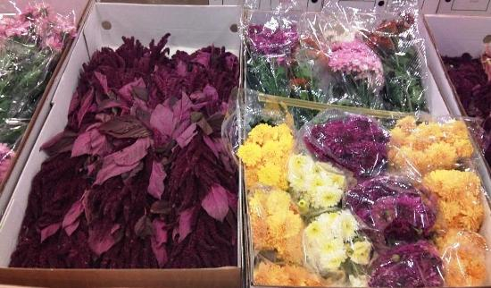 Amaranthus and chrysanths