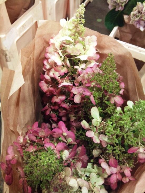 Hydrangea paniculata pink