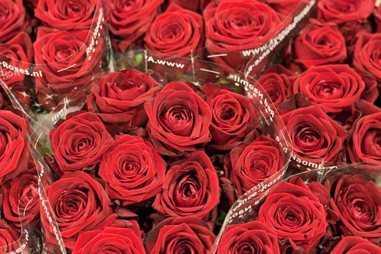 2013-02-Image-1-Bloomfield-Red-Naomi-Flowerona.jpg