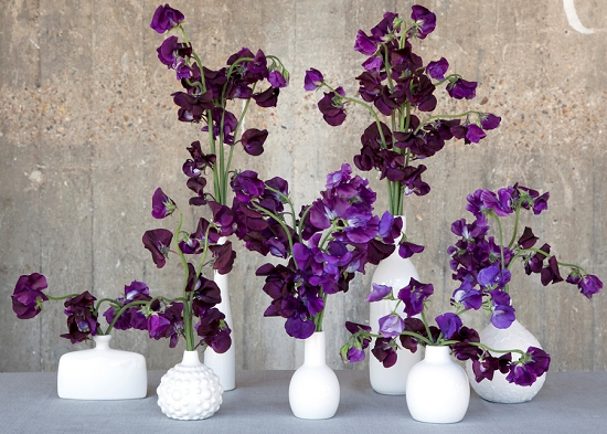 2013-06_BFW_Paul_Thomas_Sweet_Pea_small_vases.jpg