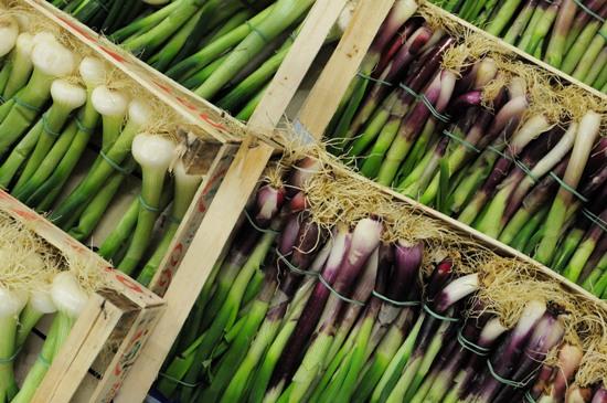 Italian Spring Onions