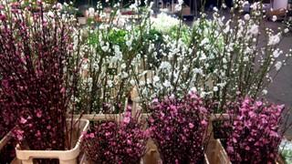 APR_blossom.jpg