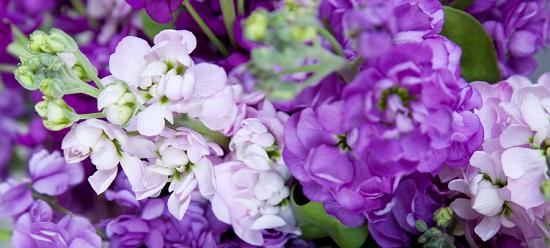 Lilac stocks