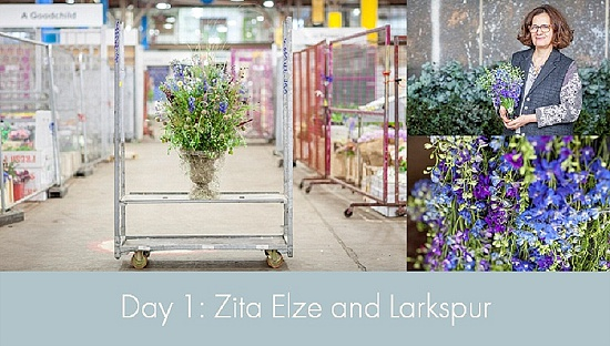 British Flowers Week 2015 - Day 1 - Zita Elze and Larkspur