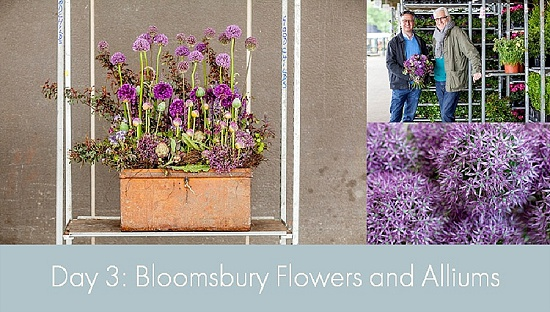 British Flowers Week 2015 - Day 3 - Bloomsbury Flowers and Alliums