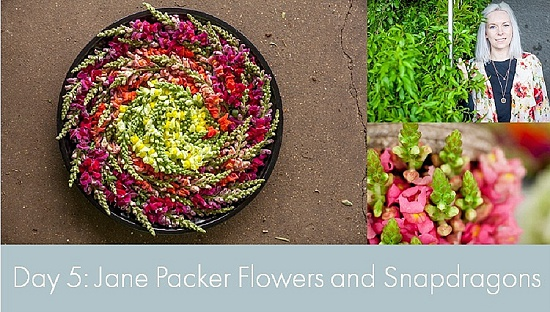 British Flowers Week 2015 - Day 5 - Jane Packer Flowers and Snapdragons