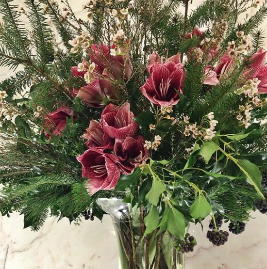 Euphoric Flowers amaryllis design