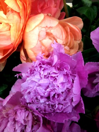 MAY_lilac_and_peach_peony.jpg
