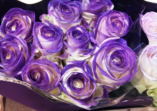 NOV_purple_dyed_rose.jpg