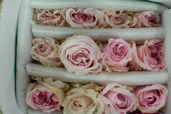 David-Austin-Miranda-Blush-Roses-at-New-Covent-Garden-Flower-Market-April-2016