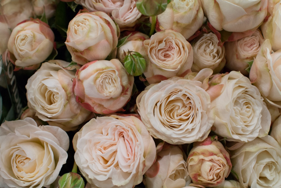 Bombastic-Spray-Roses-Blush-at-New-Covent-Garden-Flower-Market-April-2016