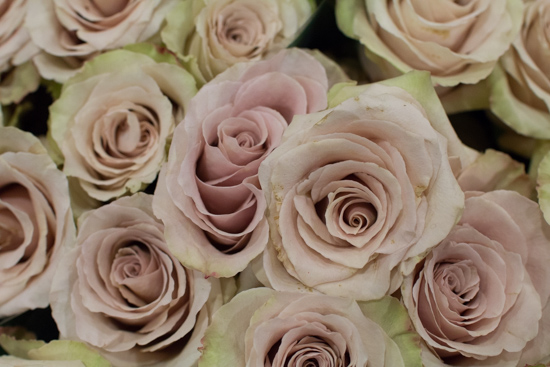 Quicksand-Blush-Roses-at-New-Covent-Garden-Flower-Market-April-2016